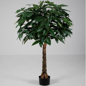 Pachira Braid Tree