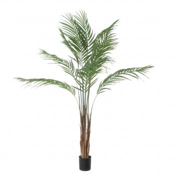 Areca Palm – 90 Cm