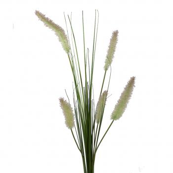 Dogtail Grass Stem