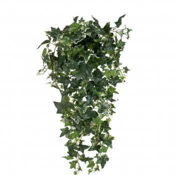 Medium Sage Ivy Hanging Bush 70cm