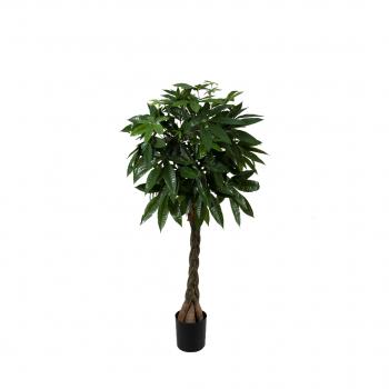 Pachira Braid Tree 180cm