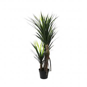 Pandanus Plant In Pot 160cm