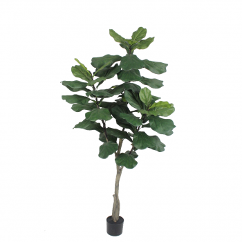 Plant In Pot Ficus Green – 183 Cm