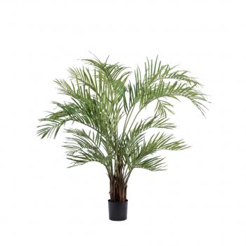 Plant Kentia Palm Green – 170 Cm