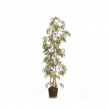 Plant Bamboo Green – 205 Cm