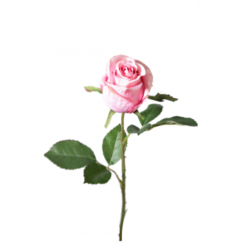 Rose Single Stem 54cm