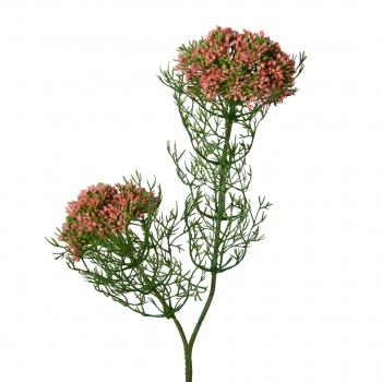 Spray X2 Mini Flower W/Dill Leaf