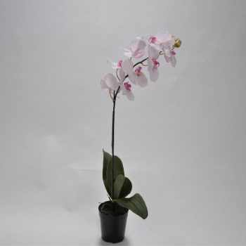 Orchid In Pot – Pink 69 Cm
