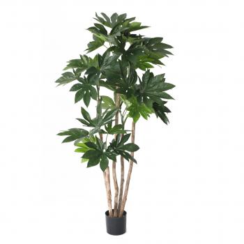 Fatsia Japonica Tree 140 Cm