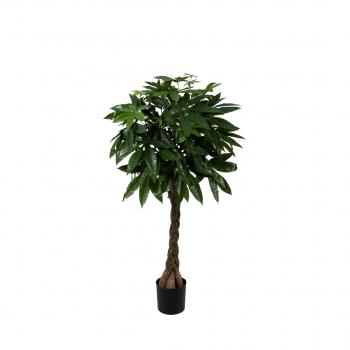Pachira Braid Tree 150cm