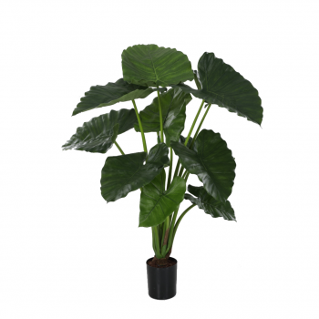 Alocasia Potted Plant W/11 Lvs 80cm