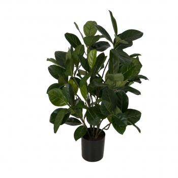 Artocapus Heter Potted Bush W/105lvs 56 Cm