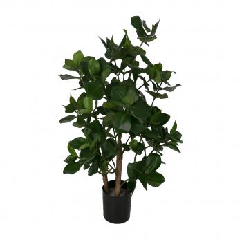 Clusia Potted Plant W/87lvs 42cm